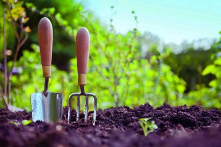 Enfermedades Más Comunes de las Plantas