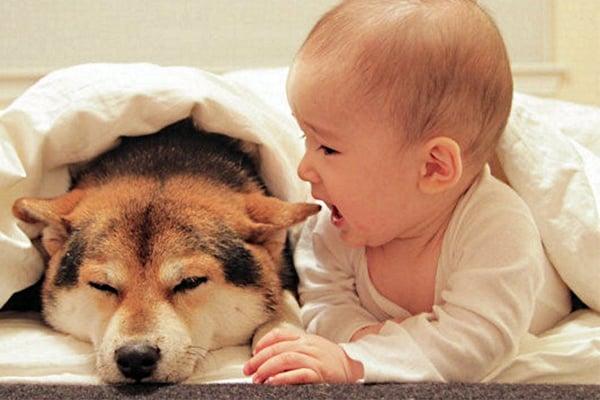 Cómo Adaptar un Perro a un Bebe