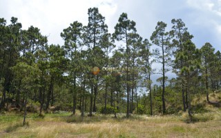 Parque Nacional Valle Nuevo