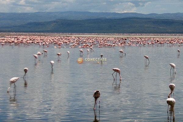 Parque Nacional de Lago Nakuro
