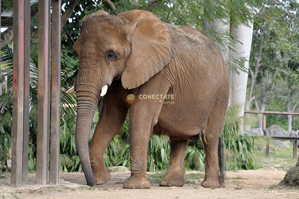 Zoológico de Miami