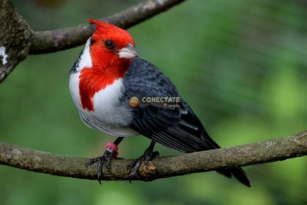 Cómo Proteger a las Aves