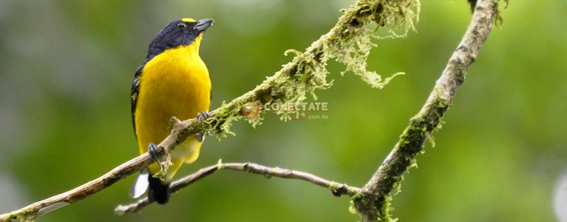 Costa Rica 35