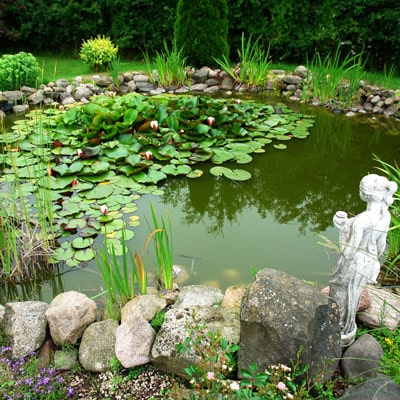 5-Step Plan for Algae Control in Water Gardens