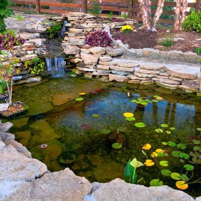 Removing Organics in Water Gardens