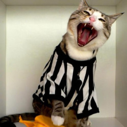 Kitteh Ref Uniform