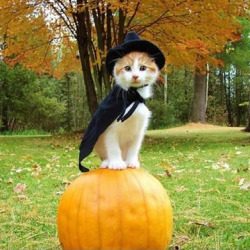 Kitteh Witch Costume