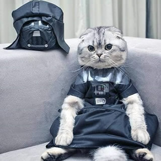 Kitteh Darth Vader Costume