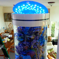 Aquarium Lighting using Blue and White LED Modules