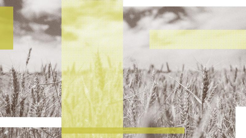 https://s3.amazonaws.com/cdn.efca.org/derivatives/16x9_medium/publishing/posts/images/2018-10/efca-post_harvest.jpg