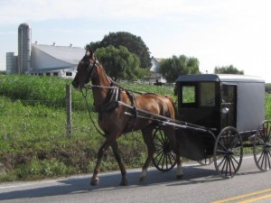 Amish buggy and horse