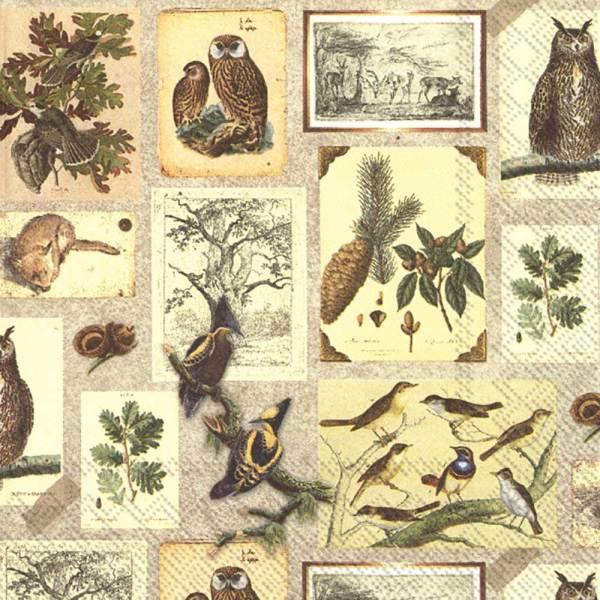 Botanical Collage Lunch Napkin