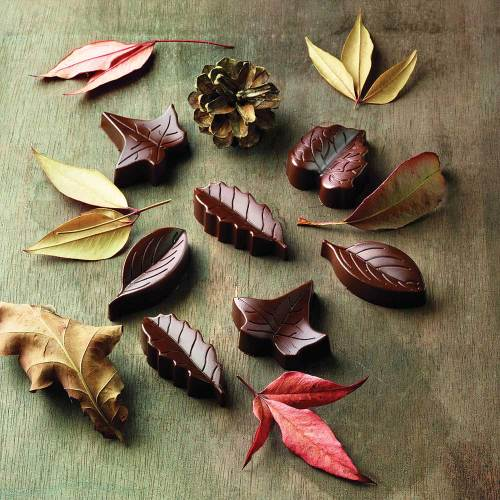 Chocolate Leaf Mold