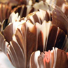 Chocolate Flower Dessert Cups How-To