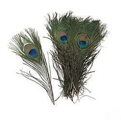 Natural Peacock Feathers, Package of 24