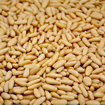Spanish Pine Nuts