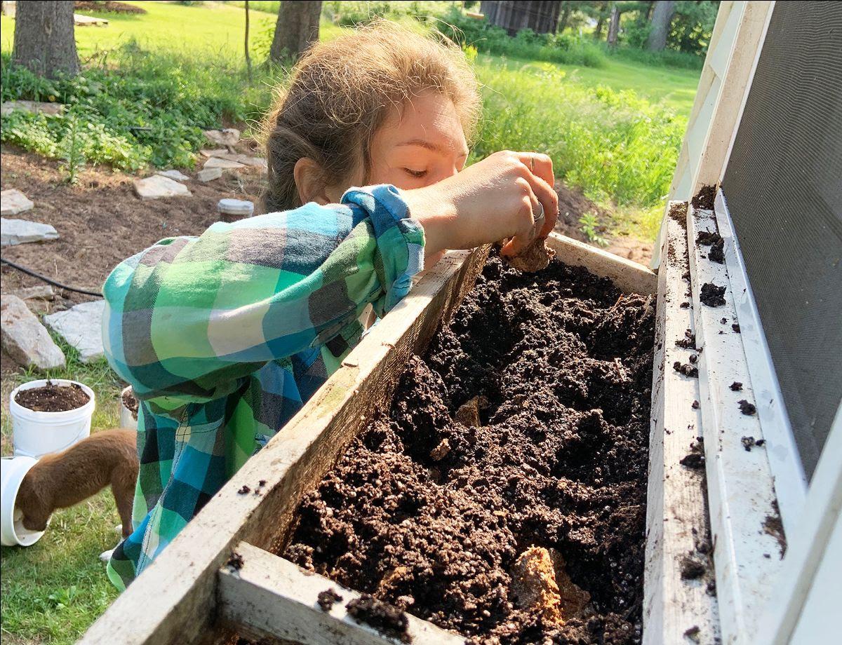 Planting Almond