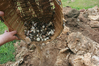 Composting Almonds