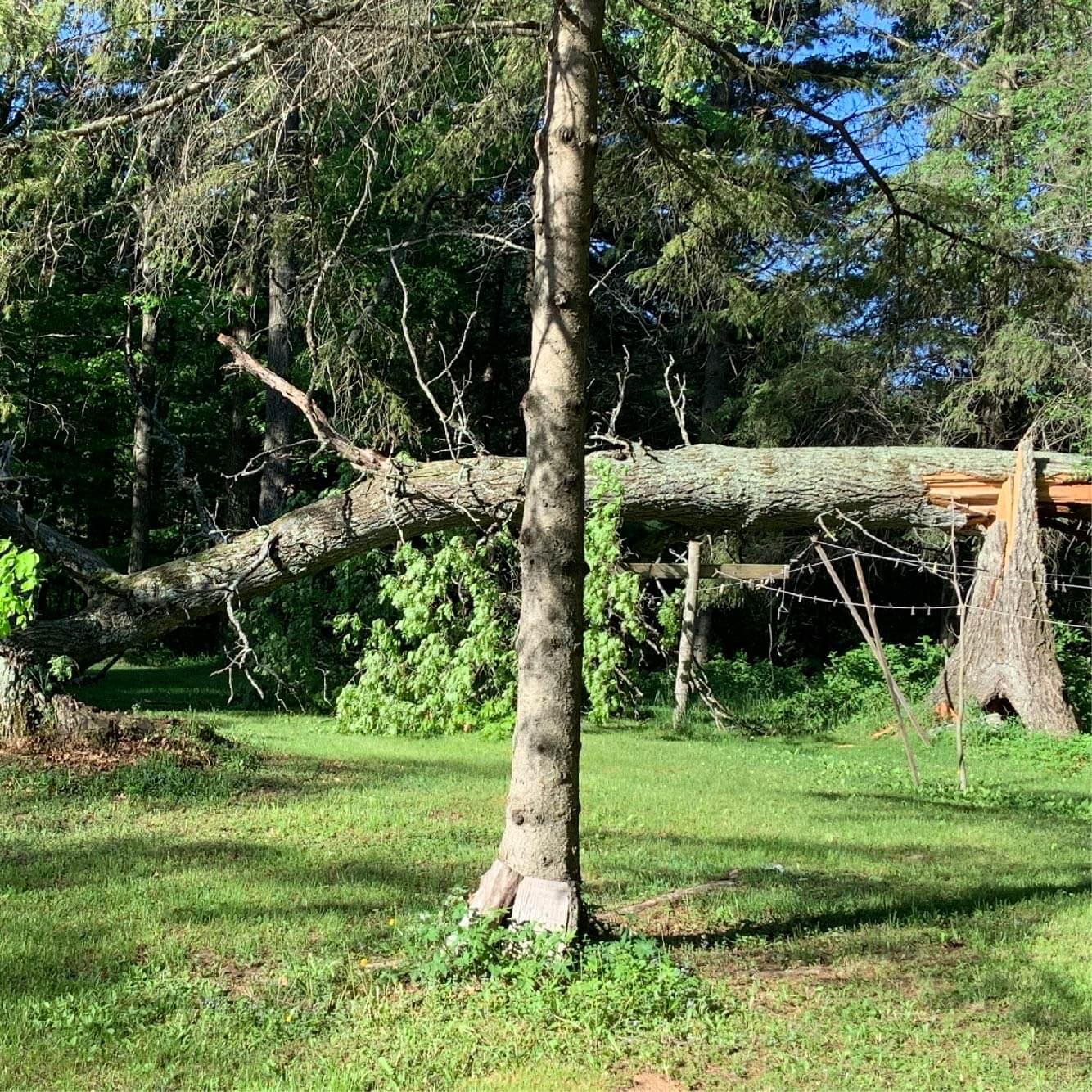 May Fall Oak