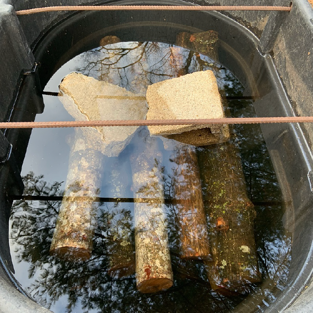 Soaking Logs