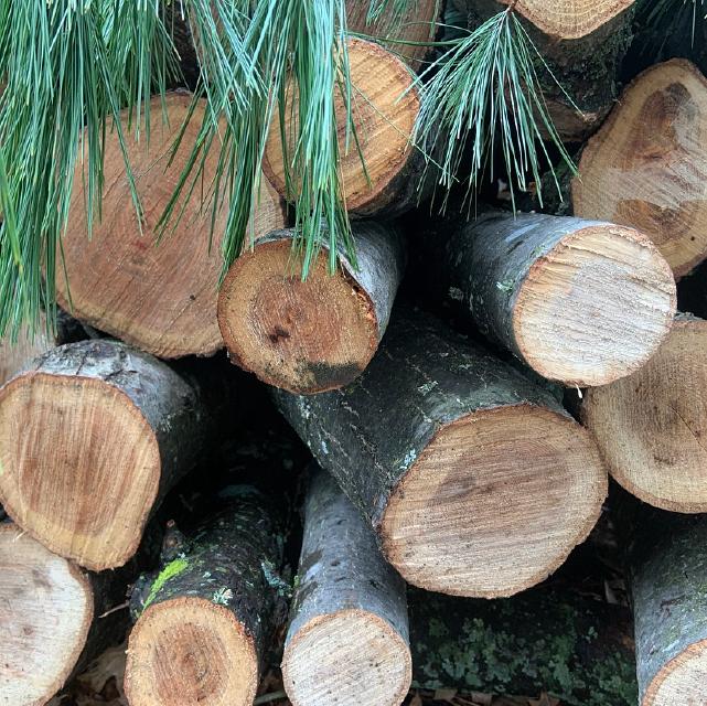 Log Varieties
