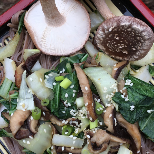 Shiitake Mushrooms and Miso Bok Choy