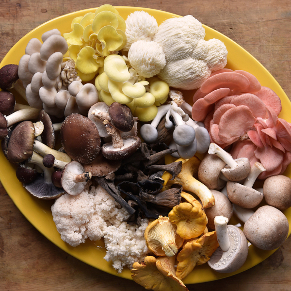 Creamy Mushroom and Leek Pie