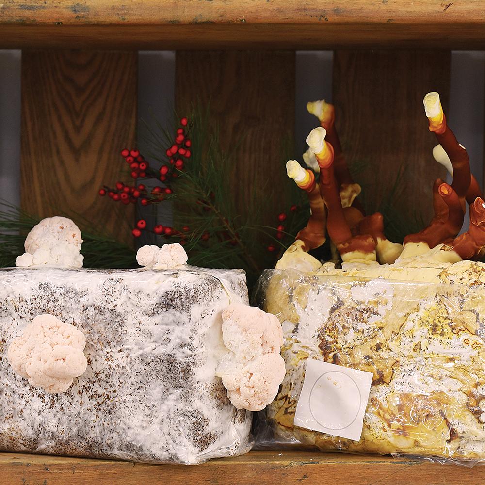Medicinal Table Top Farm Set