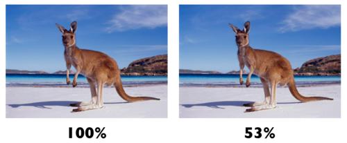 kangaroos.png.scaled500.png