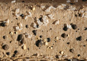 Figure 4: Bed bug egg shells and dried fecal spotting.