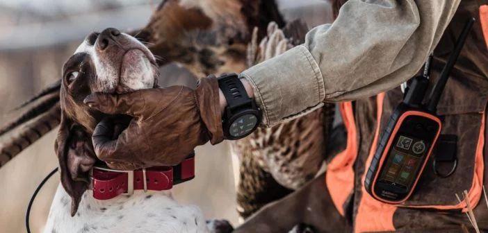 DogTrack виджет, часы Garmin Fenix, Alpha 100