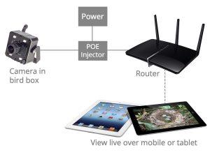 IP Camera wiring