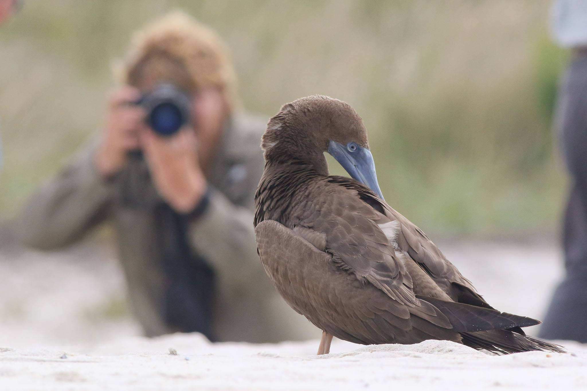 Photographing a booby