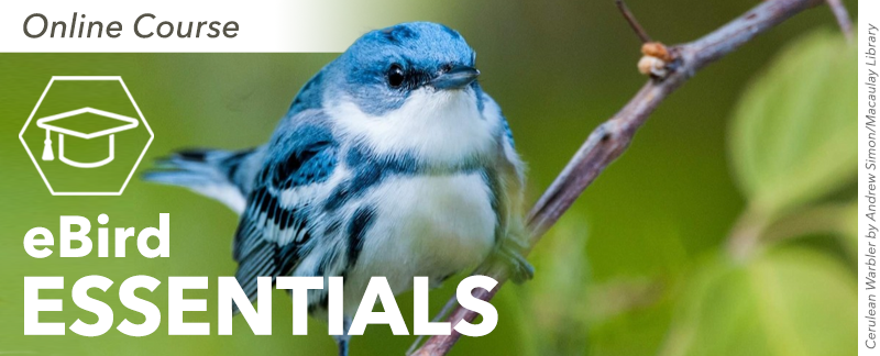 eBird Essentials