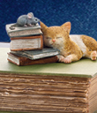Napping Kitten Box