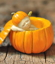 Fairy Baby in Pumpkin