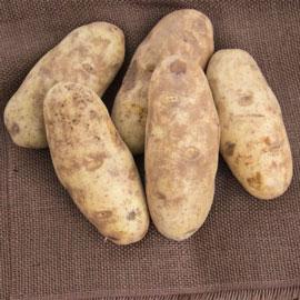Canela Russet Potato