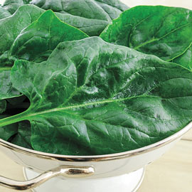 Gurney's ® Goliath™ Spinach Seed