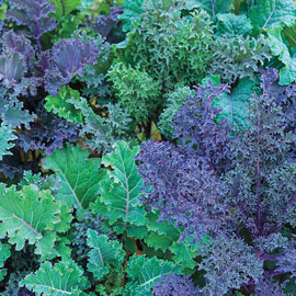 Gurney's® Winter Wonderland Kale Mix
