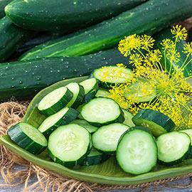 Tasty Green Hybrid Slicing Cucumber