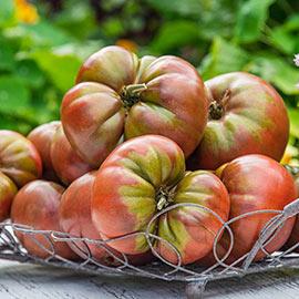 Artisan Blush Tomato