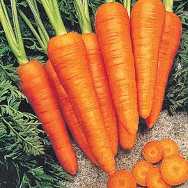 Fire Wedge Hybrid Carrot