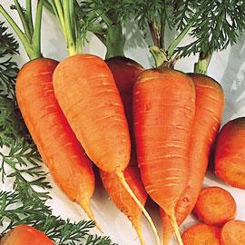 Scarlet Nantes Carrot