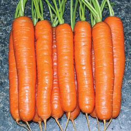 Yaya Hybrid Carrot