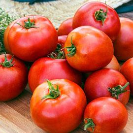 Better Boy Hybrid Tomato