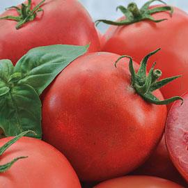 Easy Slice™ Hybrid Tomato