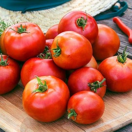 Big League Determinate Tomatoes