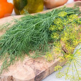 Dill Super Dukat Herbs