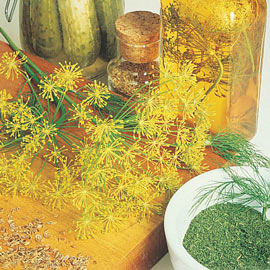 Mammoth Dill Herb