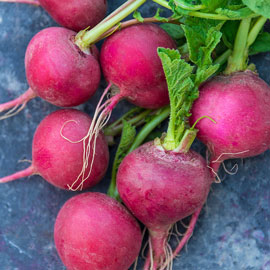 Cherry Belle Spring Radish